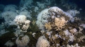 Glass sponge reefs re-discovered off B.C. coast