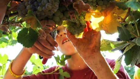 West Bank wine controversy continues as Canadian challenges 'Made in Israel' label