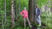 Stephen Van Drunen american chestnut tree
