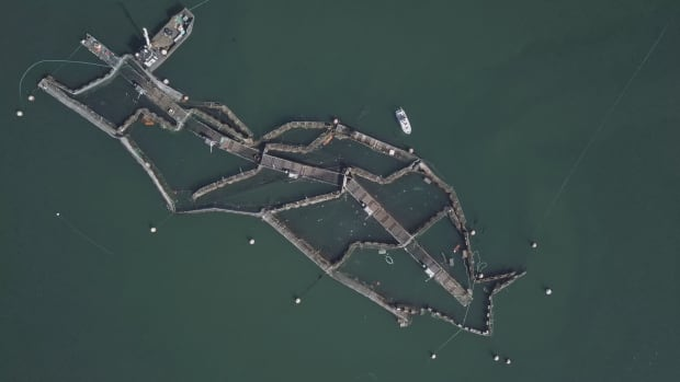 Collapse fish farm