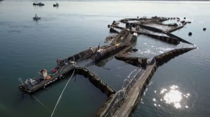 Collapsed fish farm that released thousands of Atlantic salmon had structural problems last month