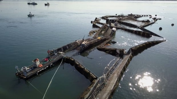 Drone footage shows the mangled remains of a net pen near Cypress Island in Washington state that collapsed Aug. 19, 2017, releasing, what a report by state agencies estimates at about 250,000 Atlantic salmon into Pacific waters.