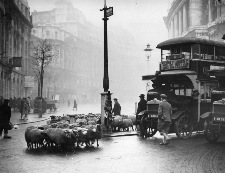 Getty - A herd of sheep wandering through the Strand in London hold up the buses, 1929.jpg