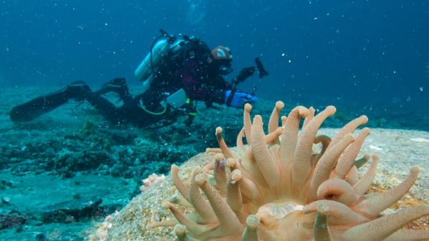 Divers will be able to take questions live from under the Arctic Ocean in Cambridge Bay, Nunvut in a Facebook livestream on Sunday. The project was organized by two University of Victoria graduates.
