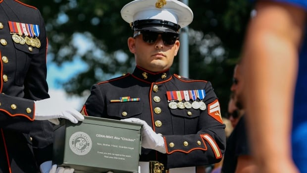 ashes of marine dog buried at michigan war dog memorial cbc news. Black Bedroom Furniture Sets. Home Design Ideas