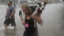 Harvey woman carries dog on her shoulders