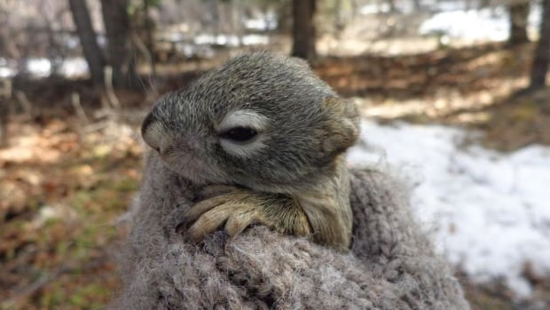 Squirrel pups born during years of abundance were more likely to survive to adulthood, researchers found.