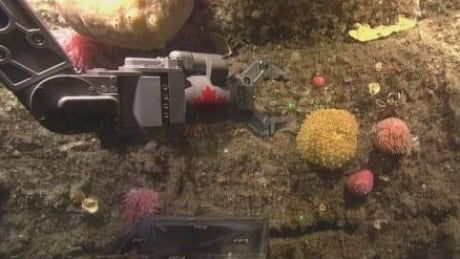 Gulf of St. Lawrence underwater footage