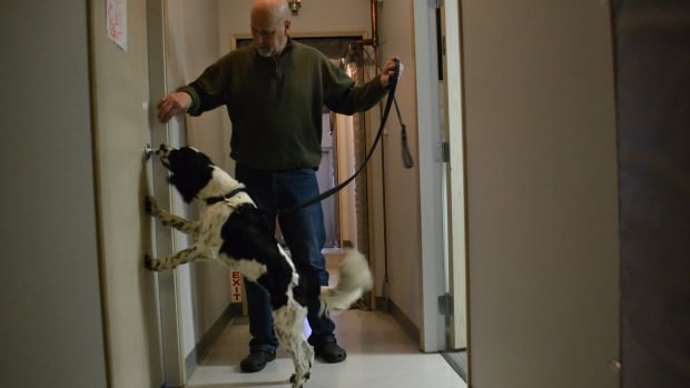 The Vancouver-based company, Canadian K9, says more stratas and landlords have been requesting its drug-sniffing dog service.