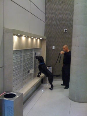 Drug sniffing dogs 2