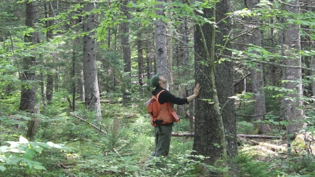 A Nature Conservancy of Canada biologist collects information about a tree species on the property near Riverside-Albert.