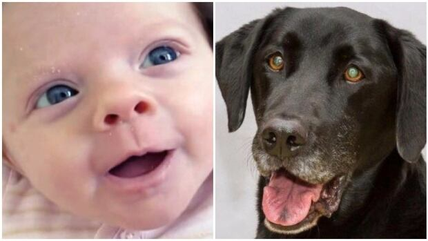 New research from the University of Alberta says having a dog or cat in the house with a baby can lead to lower rates of allergies and obesity later in life.