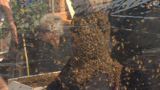 Bee Beard Guinness record