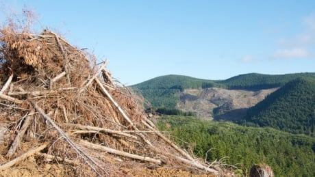 Leftovers from logging and wildfires can benefit wildlife habitats, says UBC researcher