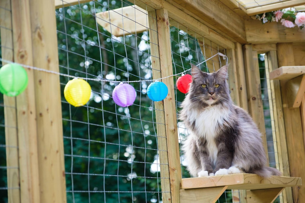 Catio living: Why a P E I  woman built a patio for her cats