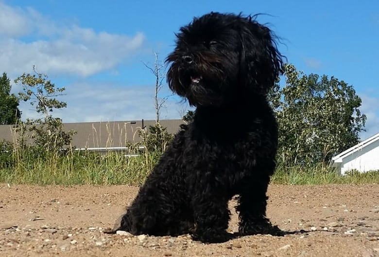 Gros Morne National Park And Dog