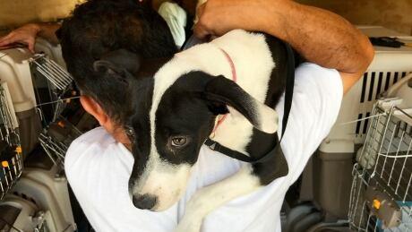 San Antonio Pets Alive!-102