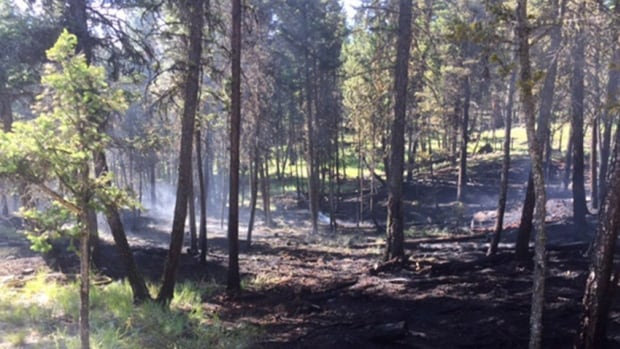 A wildfire in Logan Lake, B.C., on June 20, 2017 is seen in this handout photo.The fire stayed low to the ground and did not burn upwards to the tops of trees because of the community's wildfire mitigation efforts.