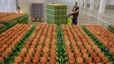 Europe Food Safety Eggs