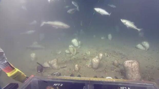 rov perspective ocean floor