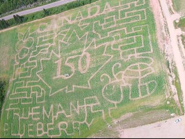 Trueman maze