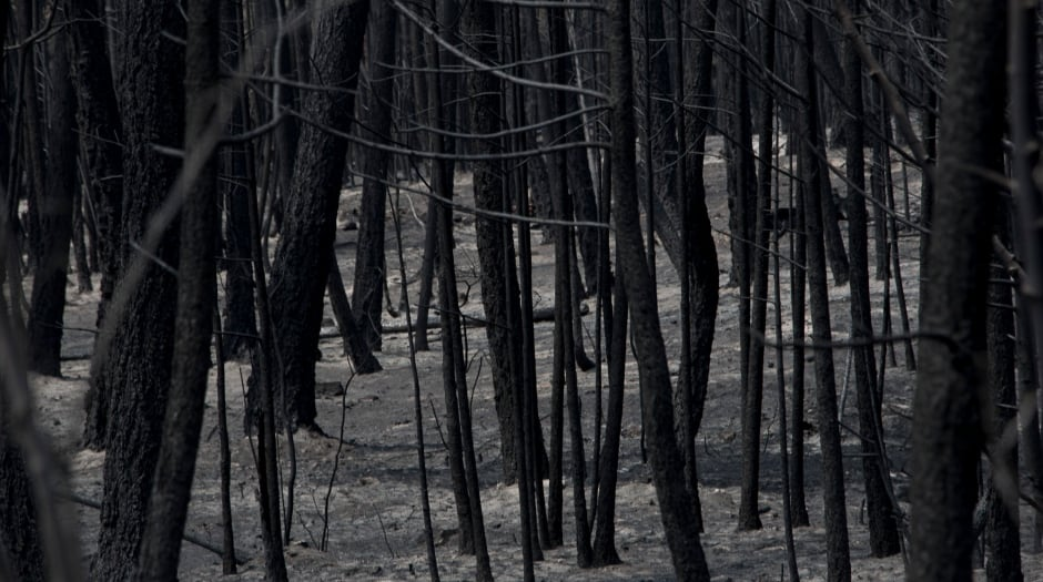 B.C. Wildfires July 2017 Burned Out Soda Creek