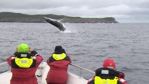 Whale watching, Bay Bulls, Newfoundland