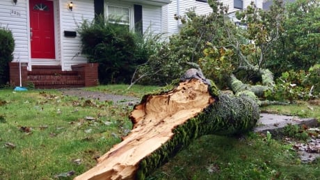 storm damage back