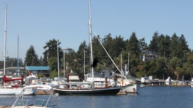 More than half of tenants on Salt Spring Island struggle to afford rent, census data shows.