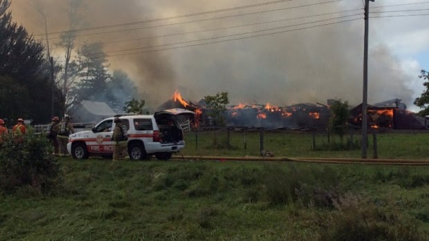 Firefighters say there were about 80 cattle inside a barn that caught fire Friday afternoon near Prince of Wales Drive and Fallowfield Road.