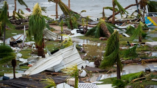 "A photo taken on September 6, 2017 shows destroyed palm trees, outside the ""Mercure"" hotel in Marigot, on the Bay of Nettle, on the island of Saint-Martin in the northeast Caribbean, after the passage of Hurricane Irma."
