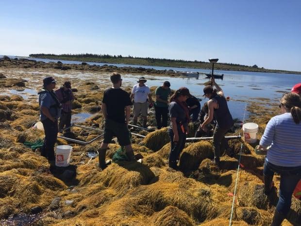 NSCC team harvesting rockweed