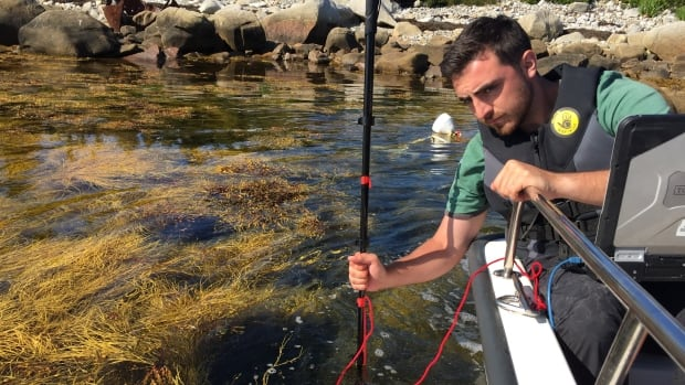 The team takes pictures of the dividing line between the harvested and non-harvested areas of rockweed.
