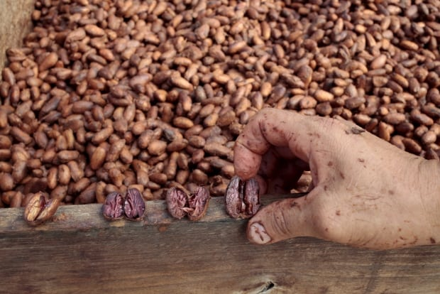 CLIMATECHANGE-COCOA/COFFEE