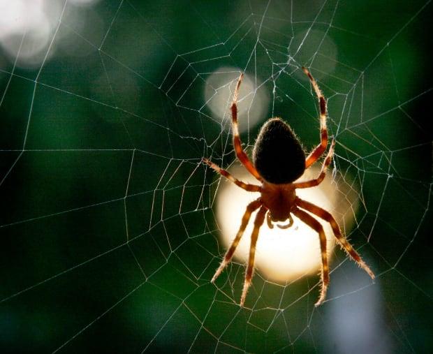 Spider at Work