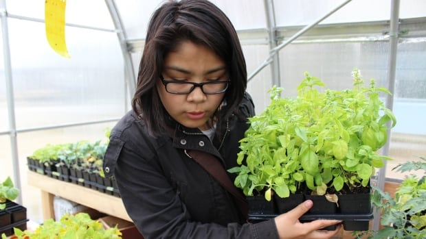 Christina Pechanos, age 15, was hired to care for the plants in the James Bay Eeyou School Greenhouse over the summer months. 'Before I worked at the greenhouse I didn't like living in Chisasibi,' she said. '[But] I really liked taking care of the plants.'
