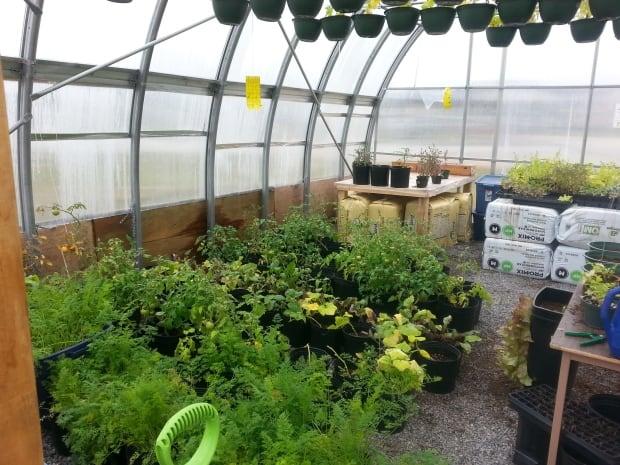 JBES greenhouse