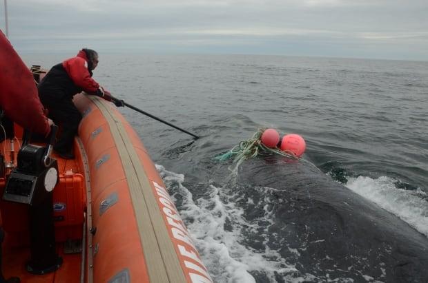 Joe Howlett rescue