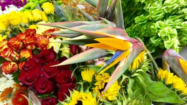 This Birds of Paradise, has been difficult to come by for florists affected by Hurricane Irma.