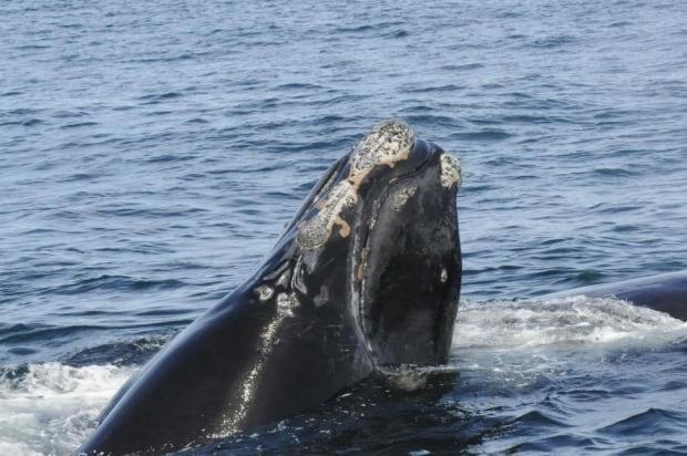 Whale #4123