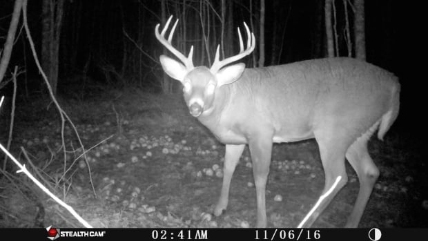 This is just one of the many deer photos Dave MacLeod has taken using his trail cameras.