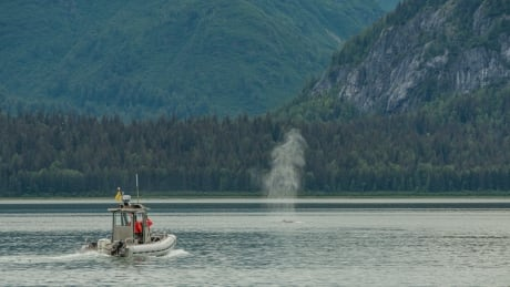 Whale monitoring