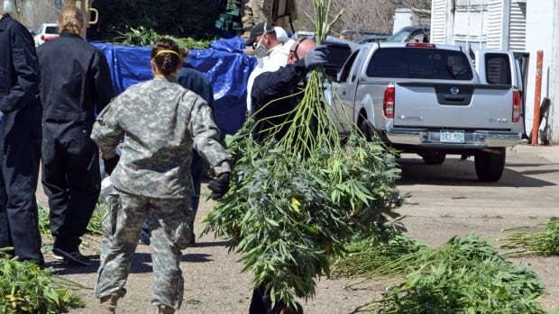 In this April 14, 2016 file photo, investigators load marijuana plants onto a Colorado National Guard truck outside a suspected illegal grow operation in Denver.