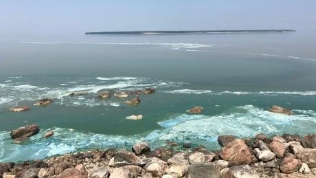 Blue-green algae at Victoria Beach