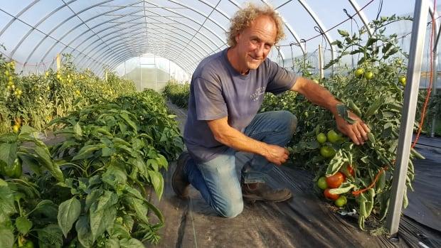 Breaking ground market gardens in northern sask growing for Garden consultant