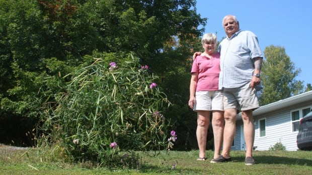 Barb and John Friske of Dacre, Ont., stand next to a flower bush they say Ugo Fredette ran over with an allegedly stolen SUV as he fled police during an Amber Alert investigation on Friday, Sept. 15, 2017.