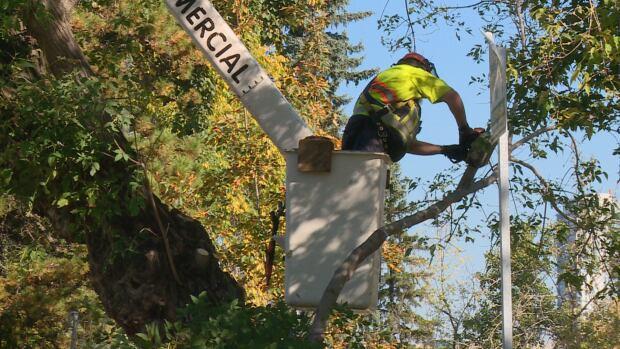 Garneau tree down