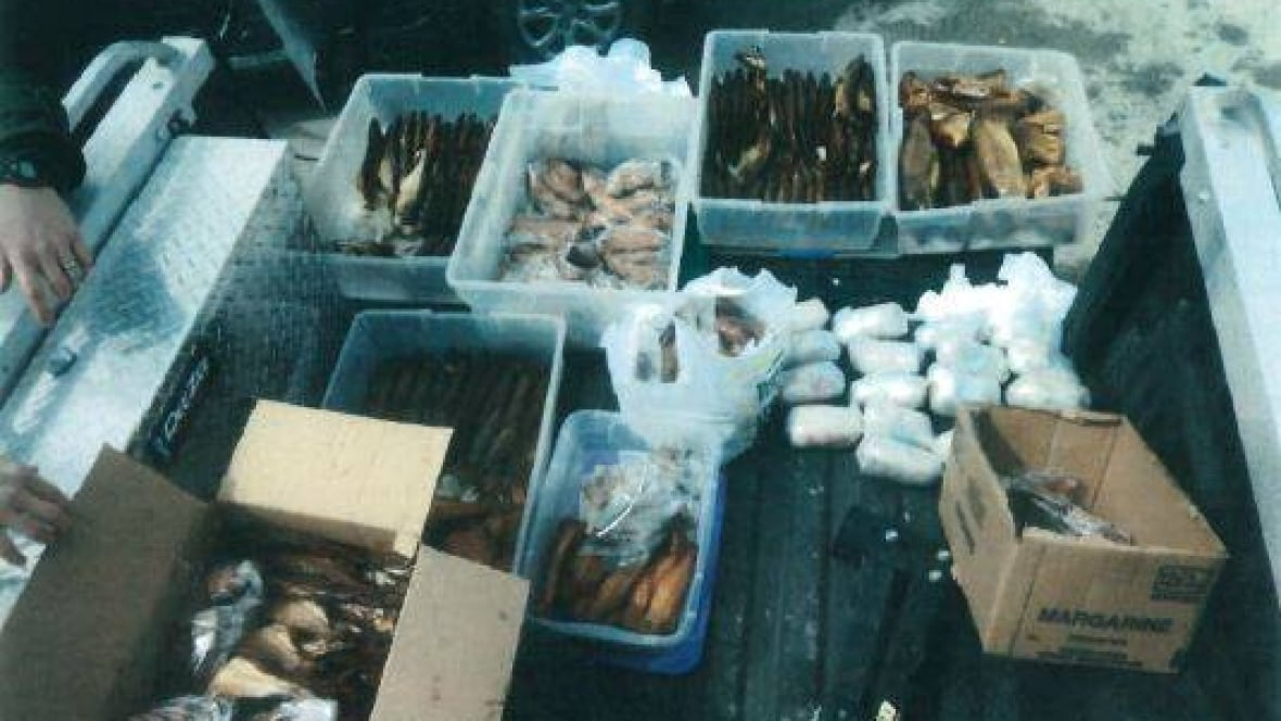 Poacher fined $5K after selling lake sturgeon in Transcona parking lot
