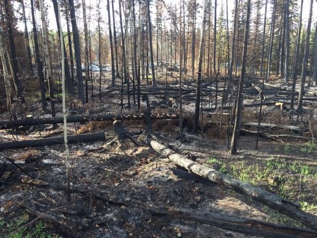 Pressy Lake wildfire destroys trees