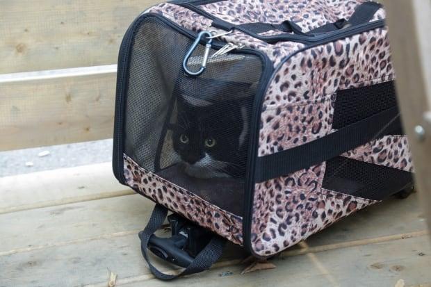 Oreo cat Lechniaks